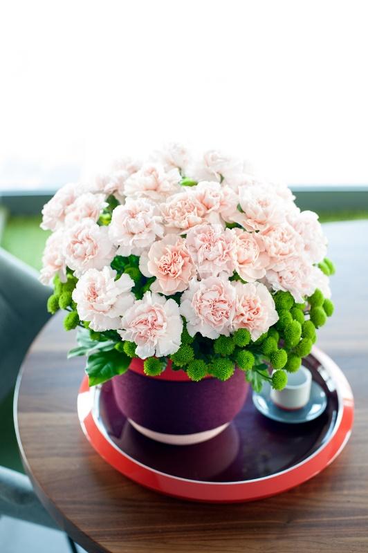 Một bình hoa Cẩm Chướng thích hợp làm hoa tặng sinh nhật mẹ
